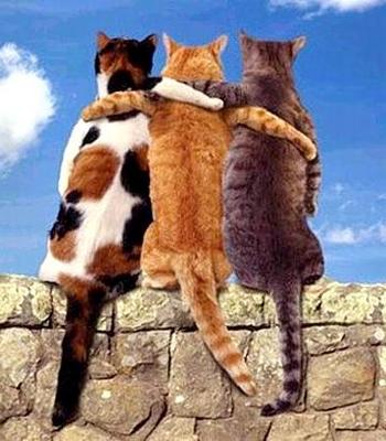 400cat_friends1
