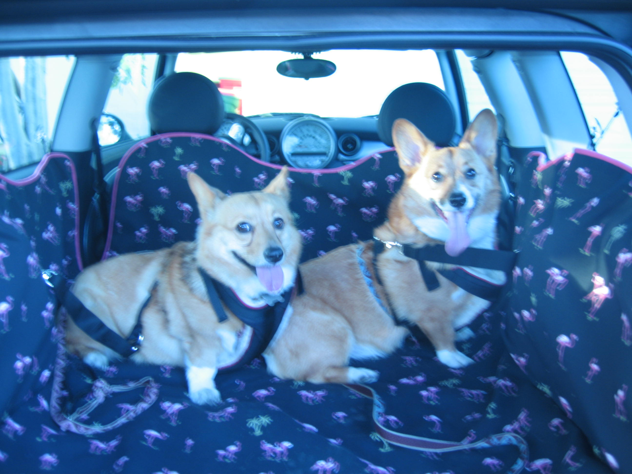Willow & Angel's 1st trip on their PoochStyle Mat